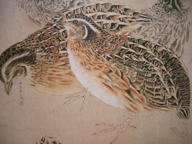 《鳥類真写図巻(ちょうるいしんしゃずかん)》渡辺始興 筆